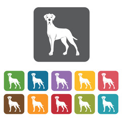 Dalmatian icon. Dog icons set. Rectangle colourful 12 buttons. V