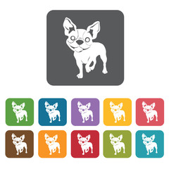 Chihuahua icon. Dog icons set. Rectangle colourful 12 buttons. V