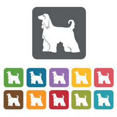 Collie icon. Dog icons set. Rectangle colourful 12 buttons. Vect