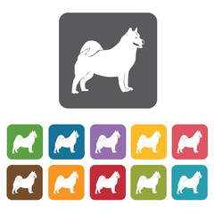 Chowchow icon. Dog icons set. Rectangle colourful 12 buttons. Ve