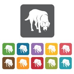 Labrador icon. Dog icons set. Rectangle colourful 12 buttons. Ve