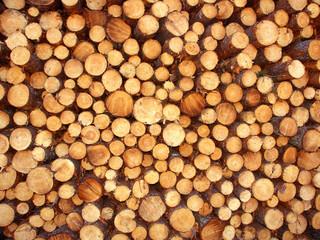 Stack of Jack Pine (Pinus banksiana) Logs in Michigan