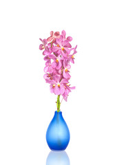 Pink Orchid flowers in vases