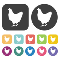 Chicken icon. Farming icon set. Round and rectangle colourful 12