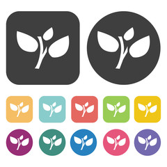 Stem with leaves icon. Farming icon set. Round and rectangle col