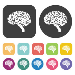 Brain icon. Human organ icons set. Round and rectangle colourful