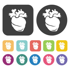 Stomach icon. Human organ icons set. Round and rectangle colourf