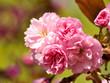 Wunderbare Blumen