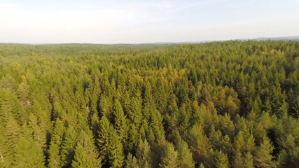 Flying high above spruce forest