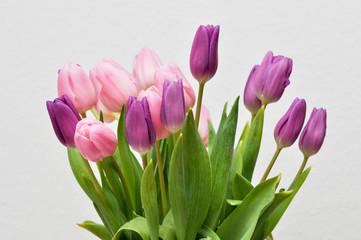 Tulpen als Dekor Element