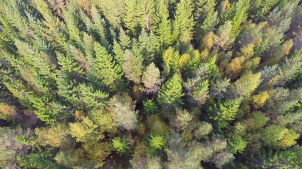 Flying over forest