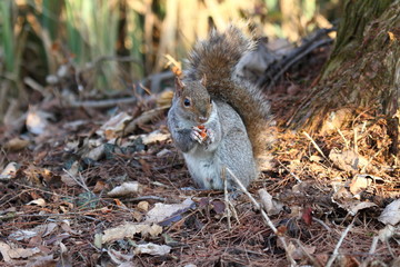 a nice example of a squirrel taken in its natural environment