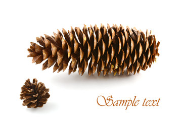 Sugar pine cone and lodgepole pine cone