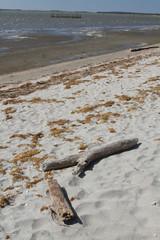 spiaggia delta del po comacchio