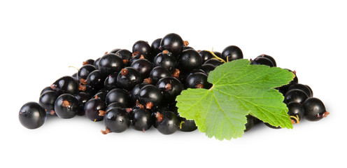 Bunch Of Black Currant With Leaf