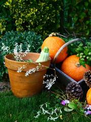 cueillette de légumes de saison,récolte au potager