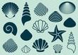 Sea shells - 70486073