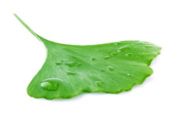 Ginkgo biloba leaves.