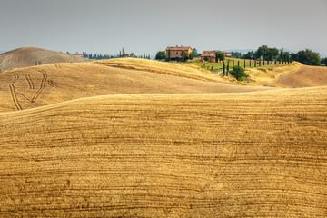 Grain fields in Tuscany