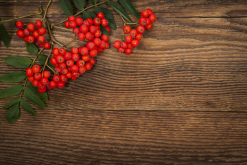 Mountain ash berries over wood