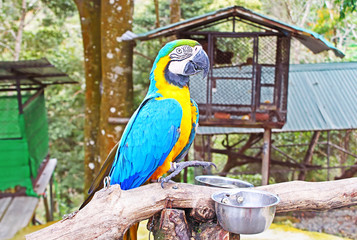 Blue and yellow macaw in the zoo