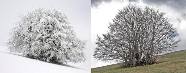 Due stagioni