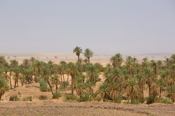 Oasis in the desert of Sahara, Tata