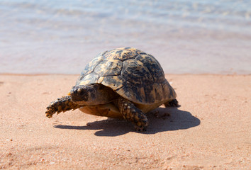 Turtle on the sandy beach.