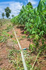 Water pipe irrigation system for cassava farm