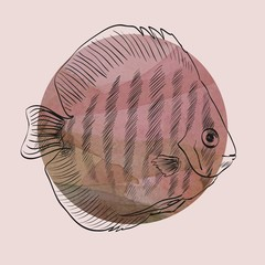 sketch of a fish