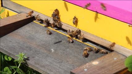 Bienen am Einflugloch, Zoomeffekt