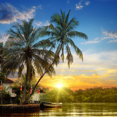river, beautiful sunrise and tropical palms