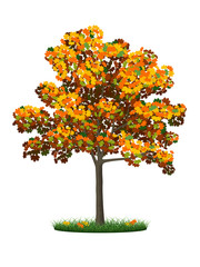 Realistic autumn tree and grass