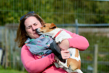Jack Russell kissing lady