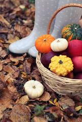 Autumn still life with different pumpkins