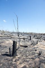 DEFORESTATION PAR FEU DE BROUSSE