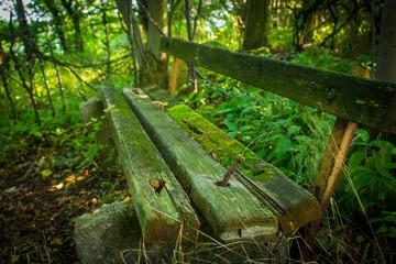 Wunderschöne alte Pank im Wald Natur pur