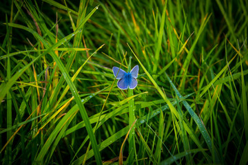 Hochzeitskarte blauer Schmetterling Frieden und Liebe