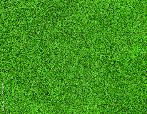 canvas print picture green grass texture
