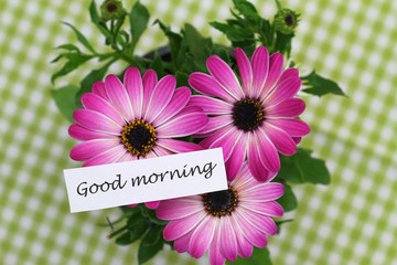 Good morning card with pink gerbera daisies