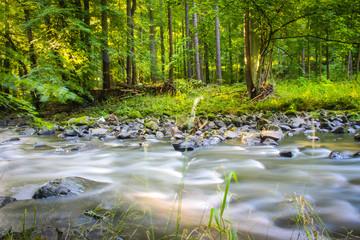 Wunderschöner Gebirgsbach im grünen Herbst