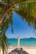 Leinwanddruck Bild - Palm tree on Bangtao beach. Thailand.