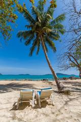 Palm tree on Bangtao beach. Thailand.
