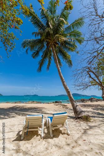 Leinwanddruck Bild Palm tree on Bangtao beach. Thailand.