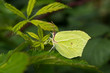 Wild green butterfly on leaf