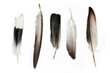 Fototapety Feathers isolated on white
