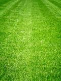 Vibrant Grass Field