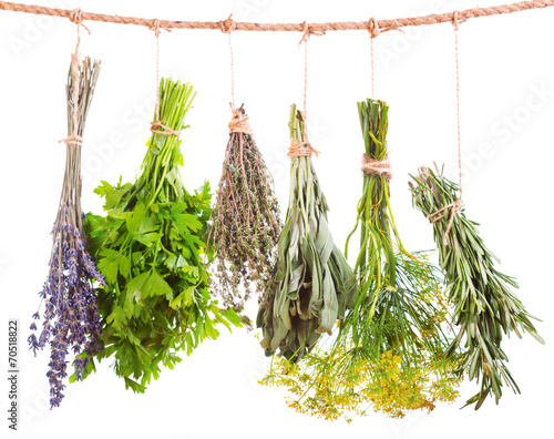 various fresh herbs hanging