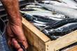 Sardinen in der Packstation - 70519804