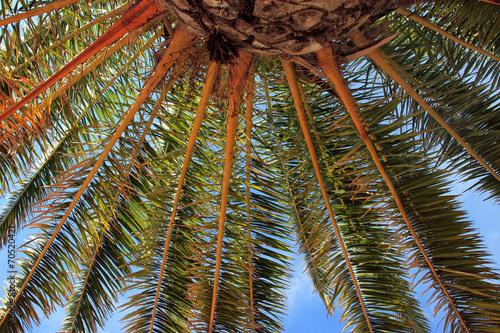 Leinwanddruck Bild Sous les palmiers.